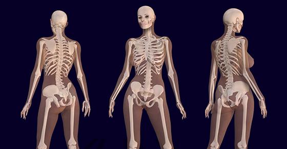 skeleton-bones